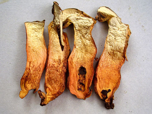 Xerocomus persicolor